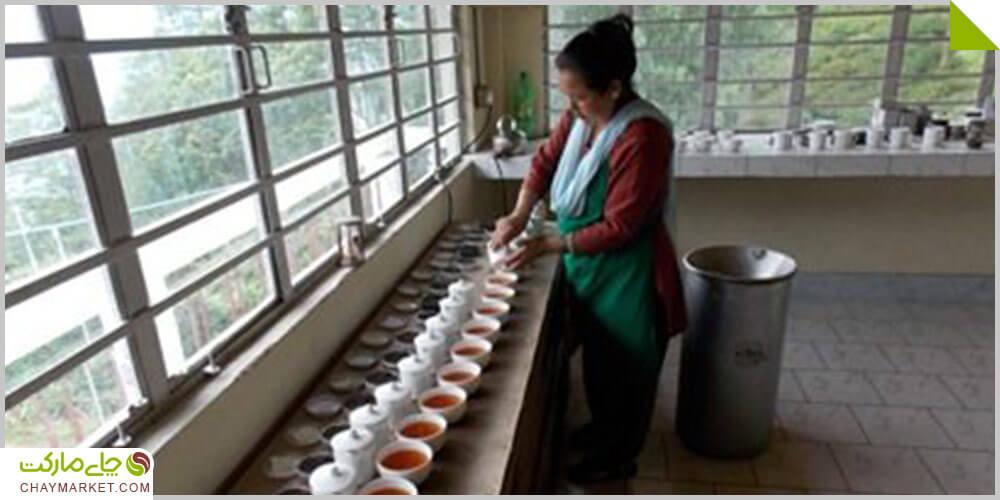 انواع چای دارجلینگ هندوستان و خواص آن